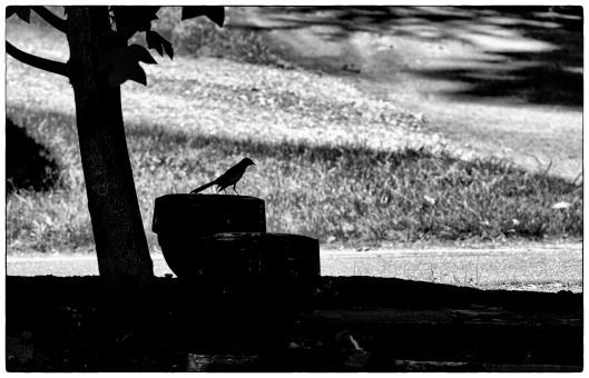 z_DSF8621_Bird Sil_BW